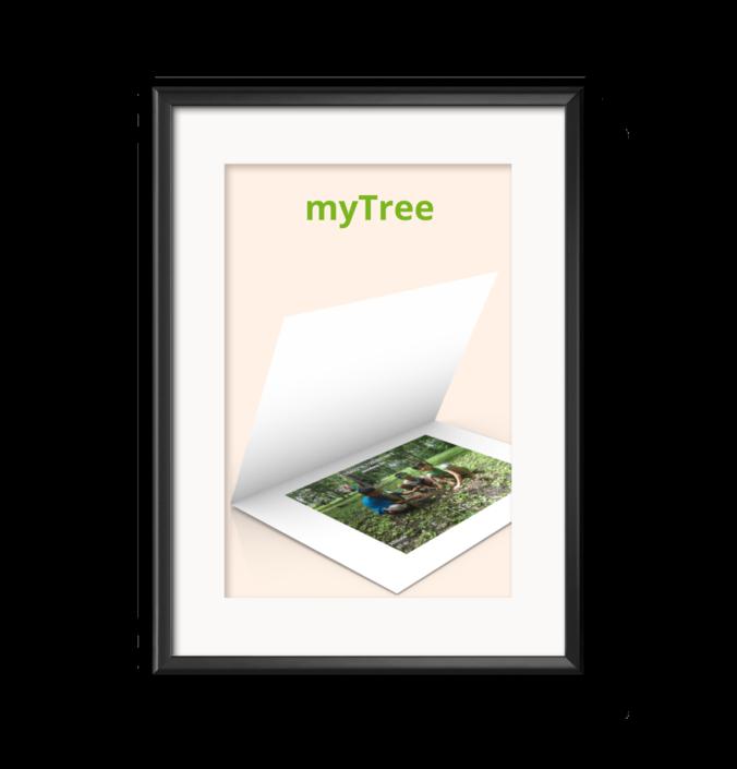 Baum mit Koordinaten kaufen